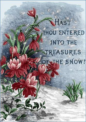 bible_scriptures__image_7_sjpg163