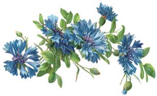 flower-drawings-3