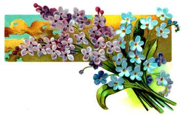 purple-flowers-8
