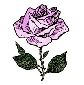 rose-2-c