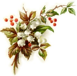 christmas-lily-of-valley