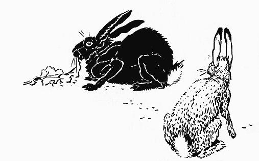 bunnies-crane