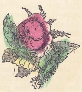 pink-flower-07