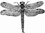 dragonfly-01