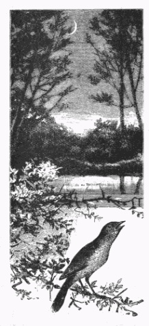 bird-images-35