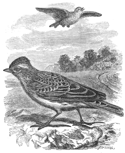 bird-images-42
