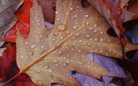 Fall_shower