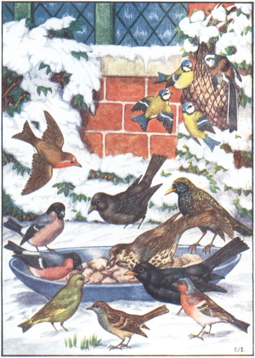 winter-birds