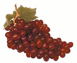 grapes_5